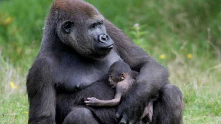 Мозъкът расте от майчината любов