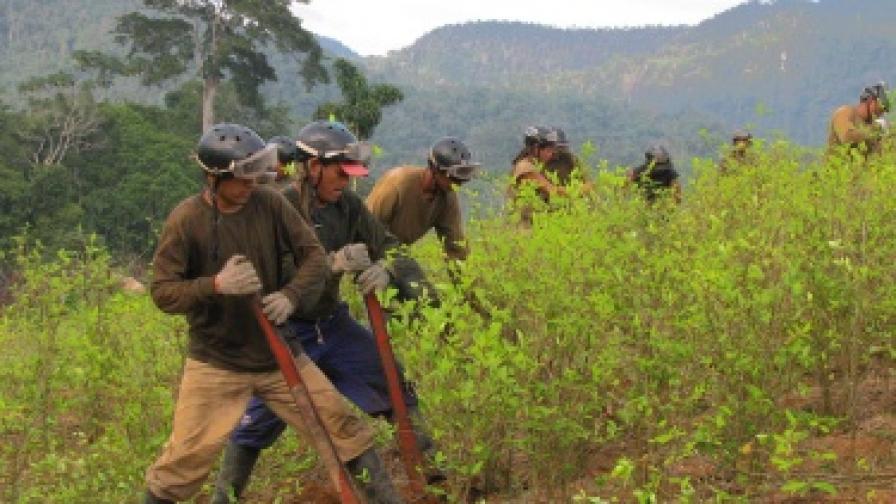 Перу: Производители на кока окупираха ТЕЦ