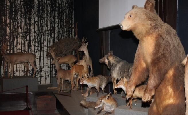 Министър в конфликт на интереси заради мечките