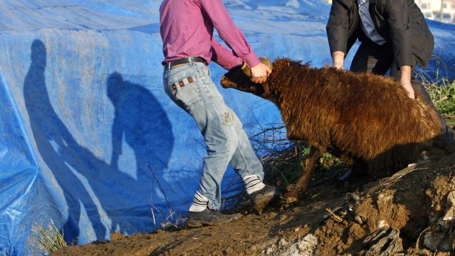 Турция: Внасят заразено със скрейпи БГ месо