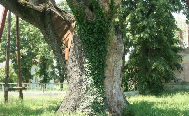 Възстановяват дъбовите гори по Черноморието