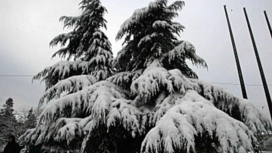 Най-много сняг е паднал в Русе