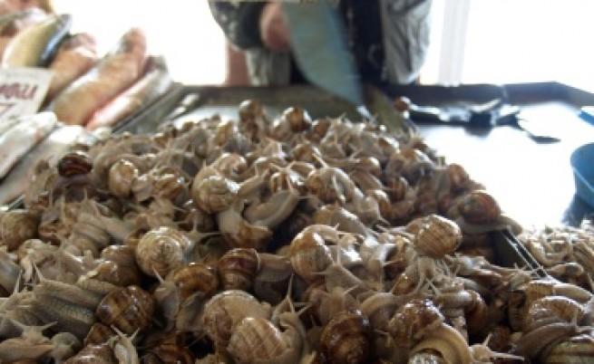 20 тона охлюви чакат анализи за износ