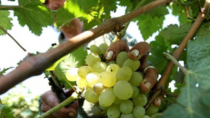 10% годишен ръст на износа на вино