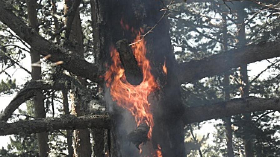 2000 декара борова гора изгоряха край Банско