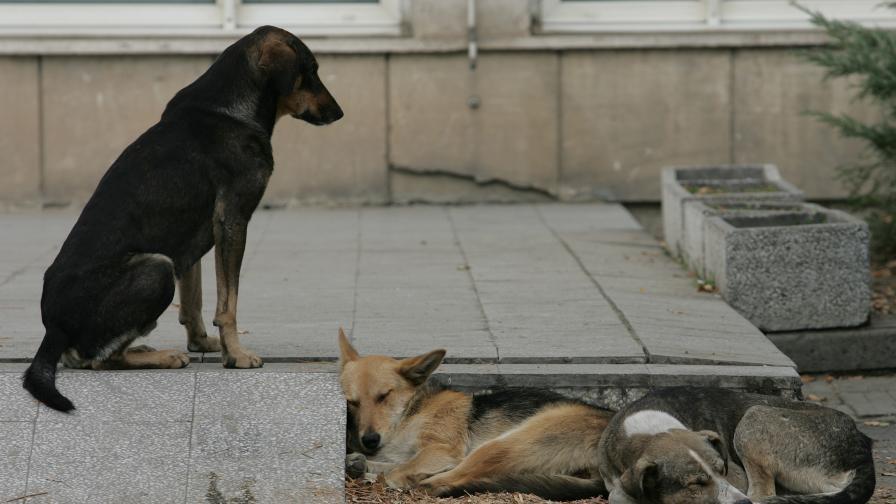 Официално: Затвор за насилие над животни