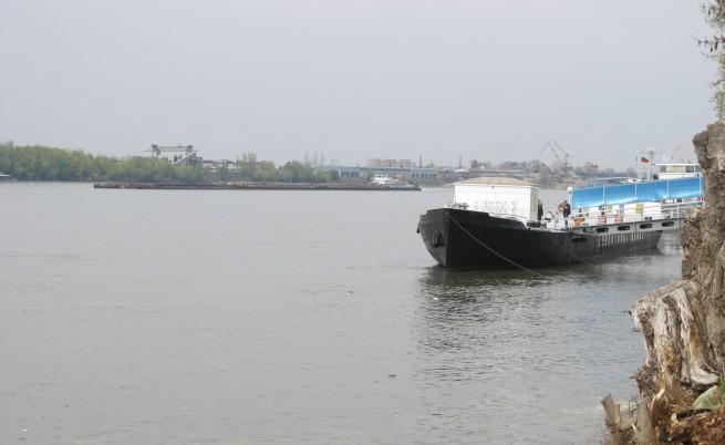 Надежда за опазването на важна риба в Дунав