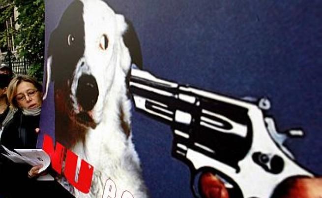 В Косово за часове избиха 190 улични кучета