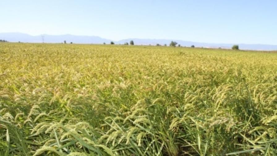Китайци искат да обработват 100 хил. декара земя в Северозападна България