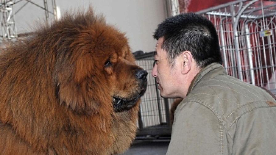 """В Шанхай: """"Едно семейство - едно куче"""""""