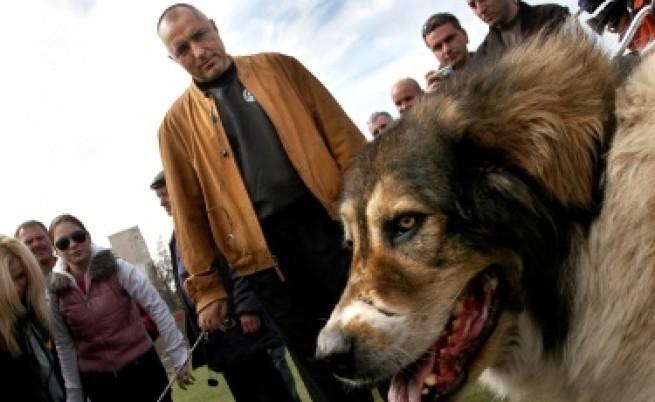 Борисов: Не съм обидил българите