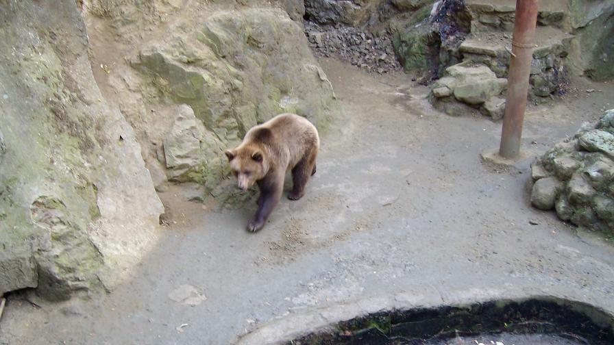 """""""Четири лапи"""": Зоопарковете у нас са под всякаква критика"""
