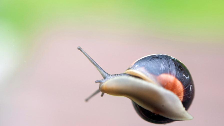 Изядените охлюви всъщност пътуват