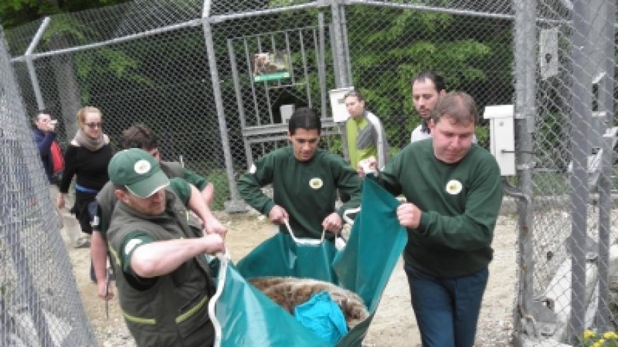 Грижа за мечките в резервата на Политбюро