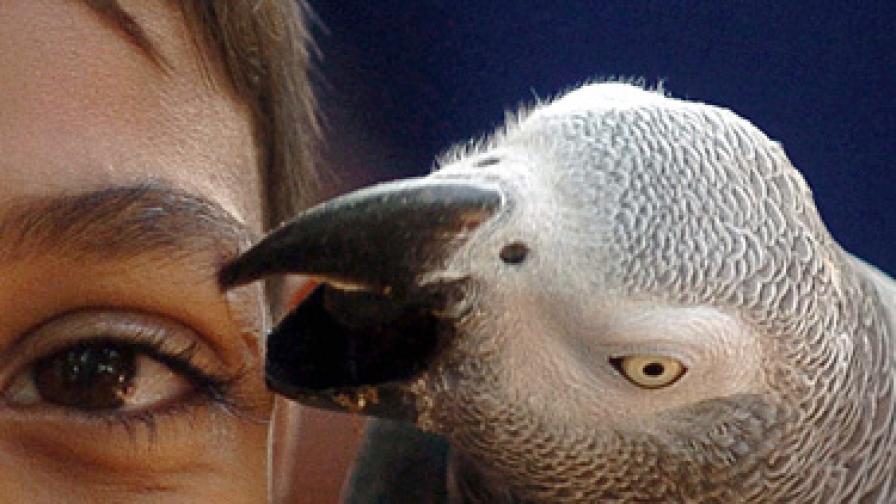 Папагал полиглот говори и английски, и урду