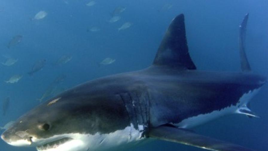 Акула уби британец край Сейшелските острови