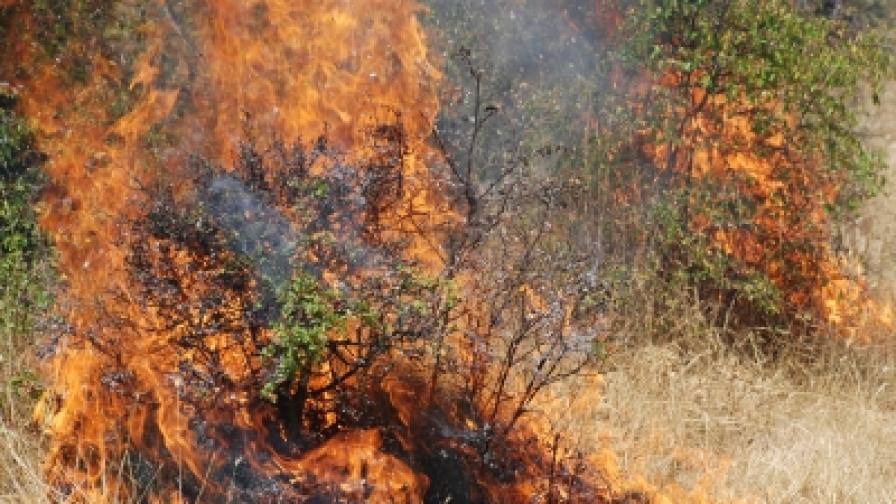 Скитник предизвика пожар край Костинброд