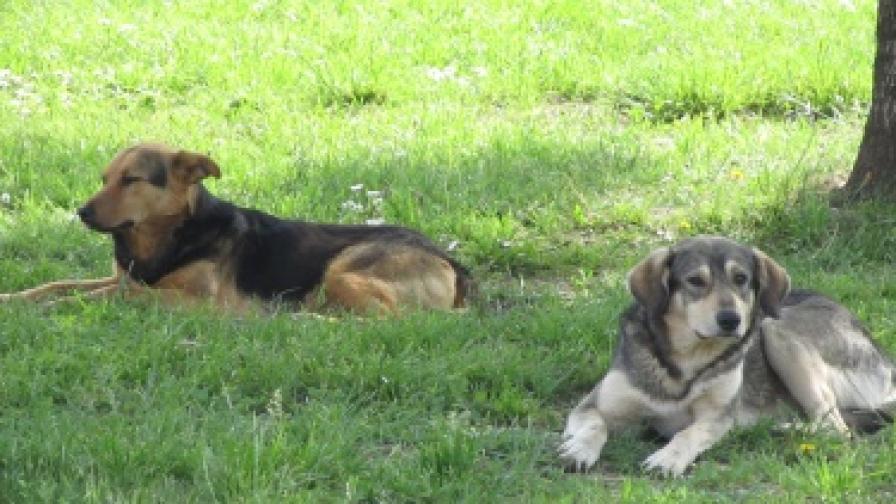 200 лева глоба за собствениците на нерегистрирано куче