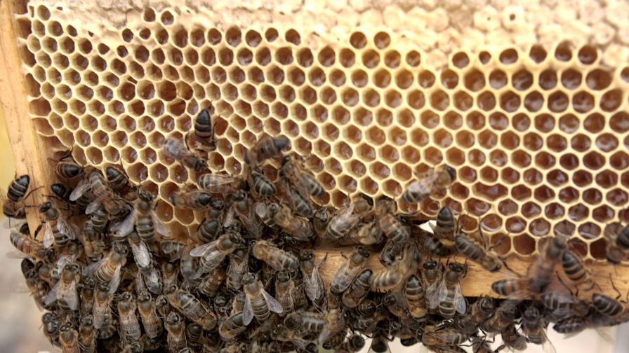 Милиони пчели на свобода след катастрофа