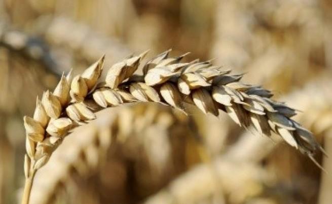 Дянков заплаши зърнопроизводителите