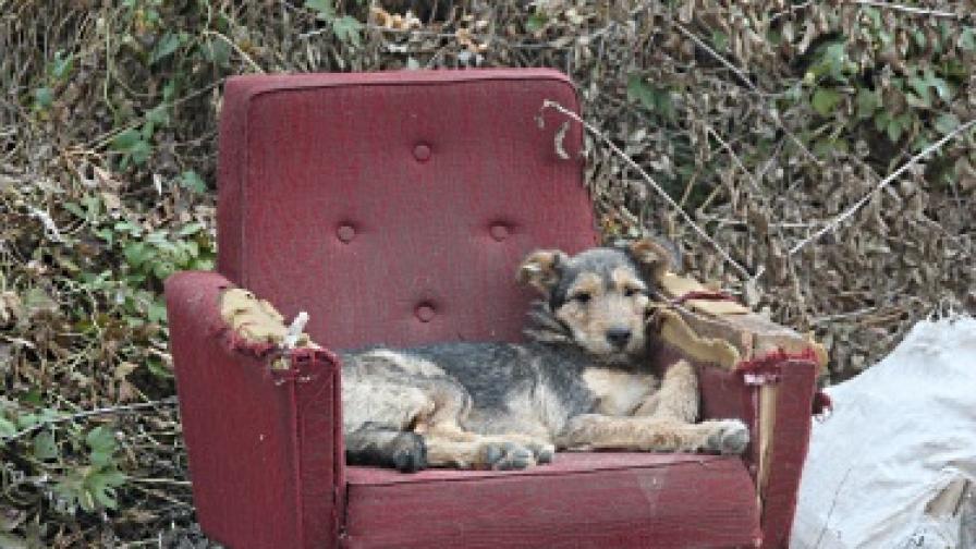 В Румъния ще евтаназират уличните кучета