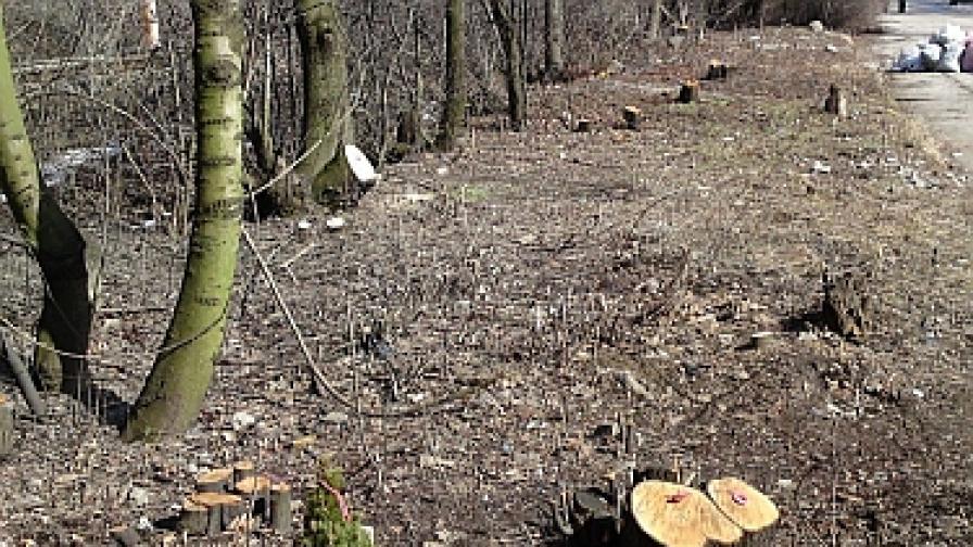 Хванаха роми да секат и изнасят дъбове от Западен парк