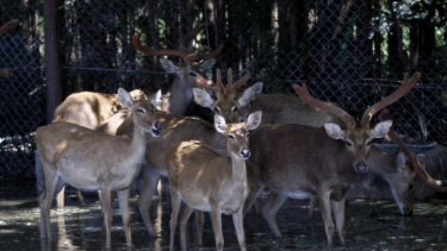 Какво стои зад разстрела на кошутите и елените