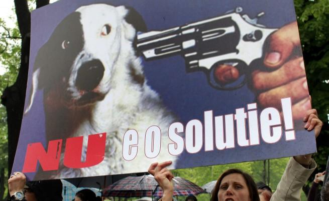 Победа: Бездомните кучета в Букурещ ще живеят