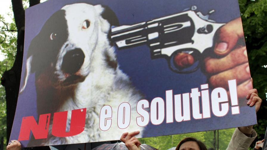 Протест срещу избиването на кучета в Румъния