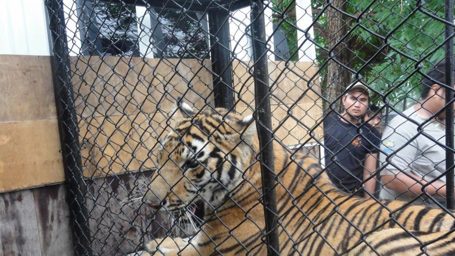 Йордан Стоянов-Дамбовеца окончателно оправдан за тигрите