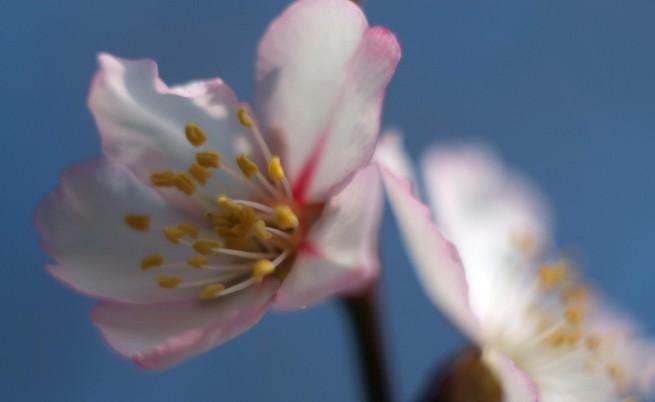 НИМХ: След последното захлаждане чакаме хубава и топла пролет