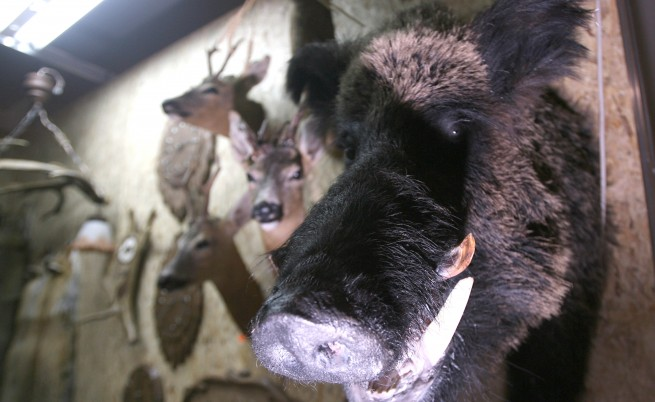 ИАГ: Като ги хванем, бракониерите почват да звънят на кого ли не