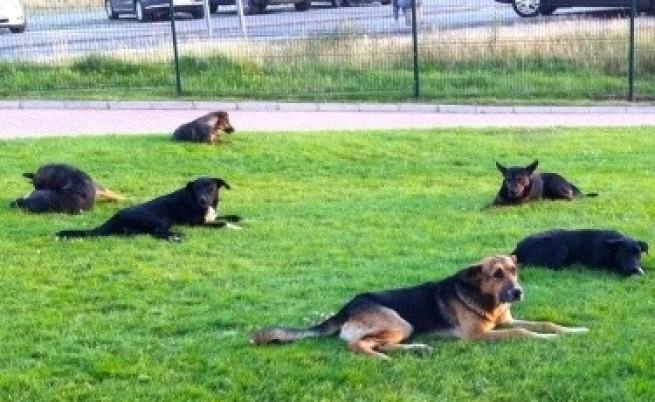 Министър: Може да стигнем и до евтаназия на кучета