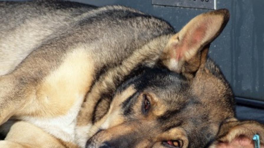 <p>&bdquo;Екоравновесие&rdquo;: Кучетата се крият много добре през нощта</p>