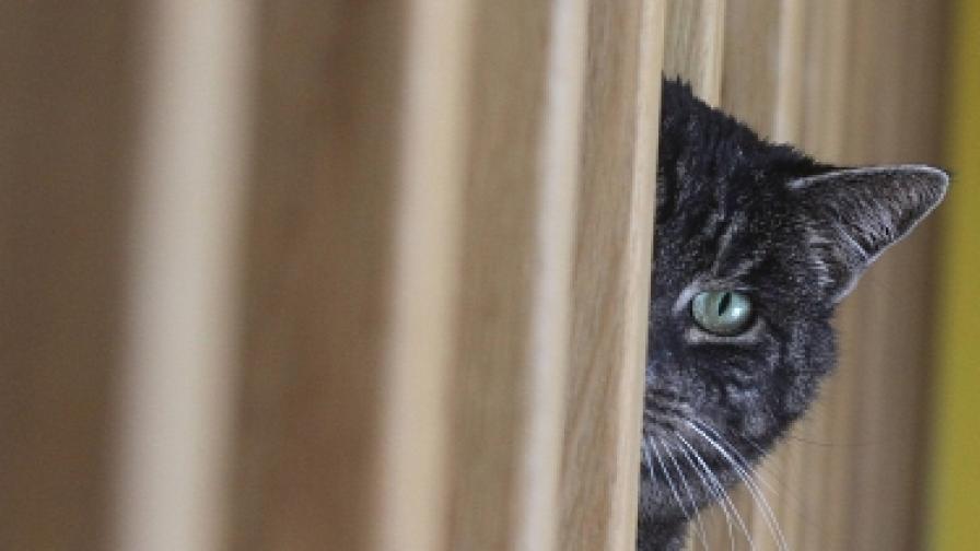 Котка се гласи за политик в Русия