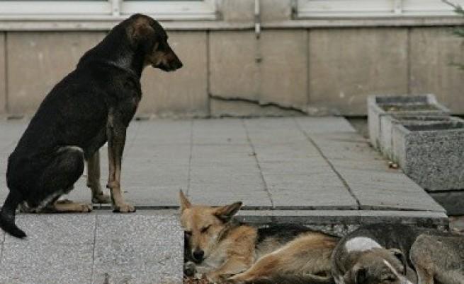 Евтаназирани са 4 от кучетата убийци от Малинова долина