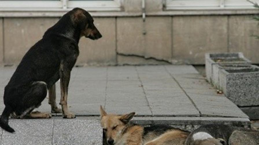 Кучетата са един от основните проблеми на София
