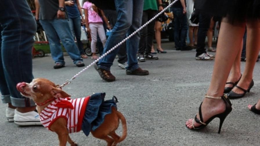 Нова мода за кучета - изкуствени тестиси за самочувствие