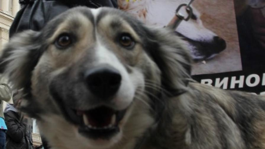 Омбудсманът: За кучетата - шокова кастрация