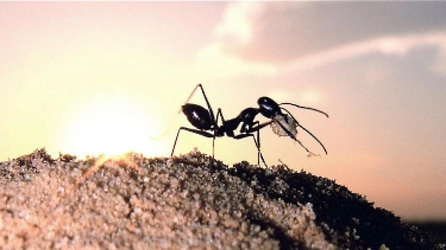 Как мравки ще танцуват балет