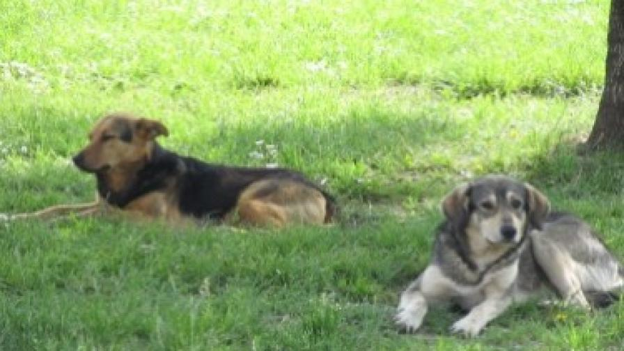 Сигналите за бездомни кучета намалели през май