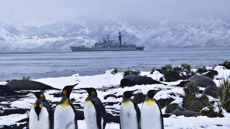 Перверзиите на пингвините - заради студа