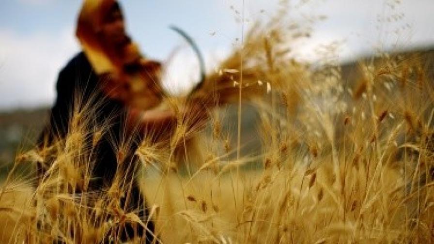 Проверяват зърнопроизводители за ДДС измами