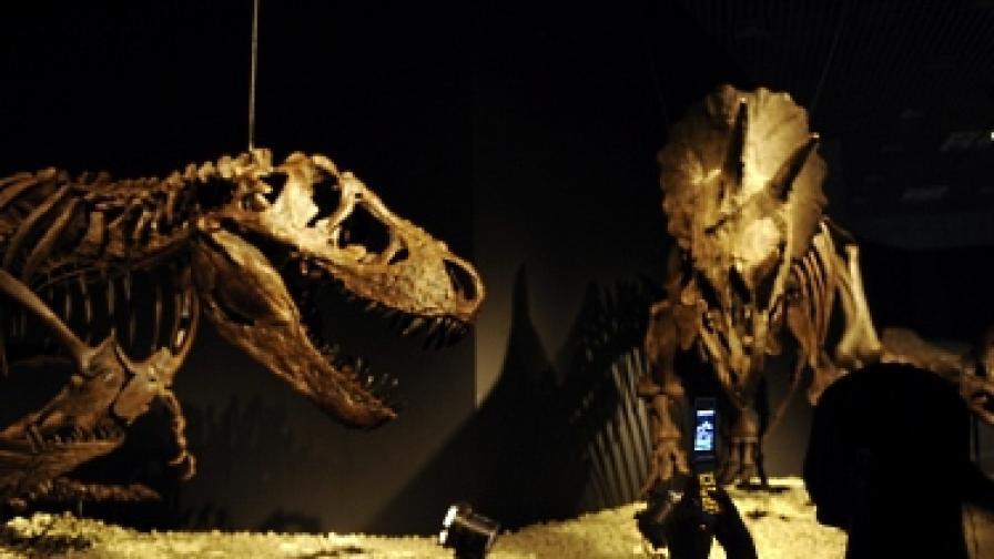 Намериха кратера от метеорита, убил динозаврите