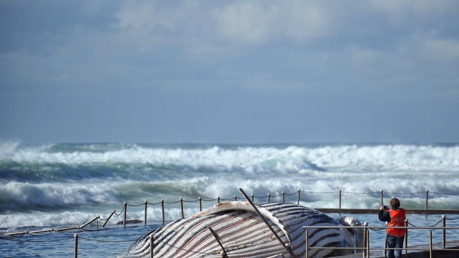 Ураганен вятър връхлетя Сидни и околността му