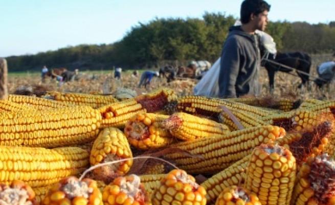 Сушата ще удари цените на храните и у нас