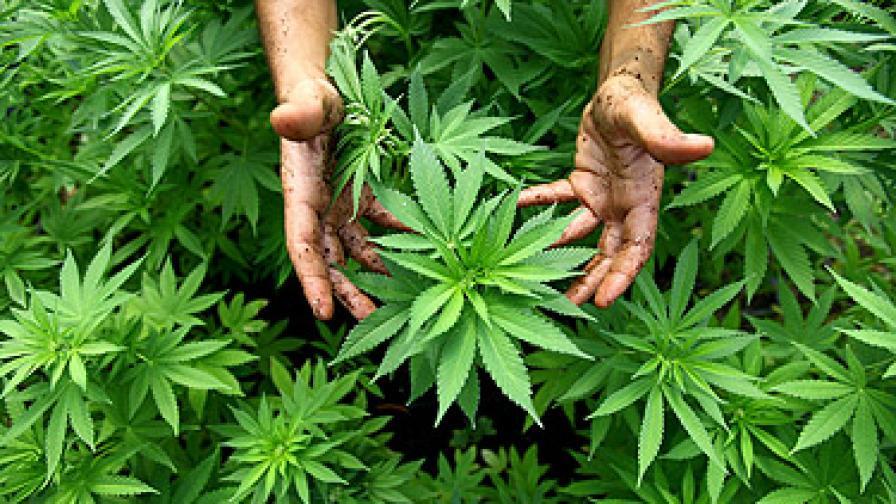 Стотици за марихуаната в Полша: Садим, пушим, узаконяваме