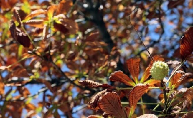 Летни температури в средата на октомври