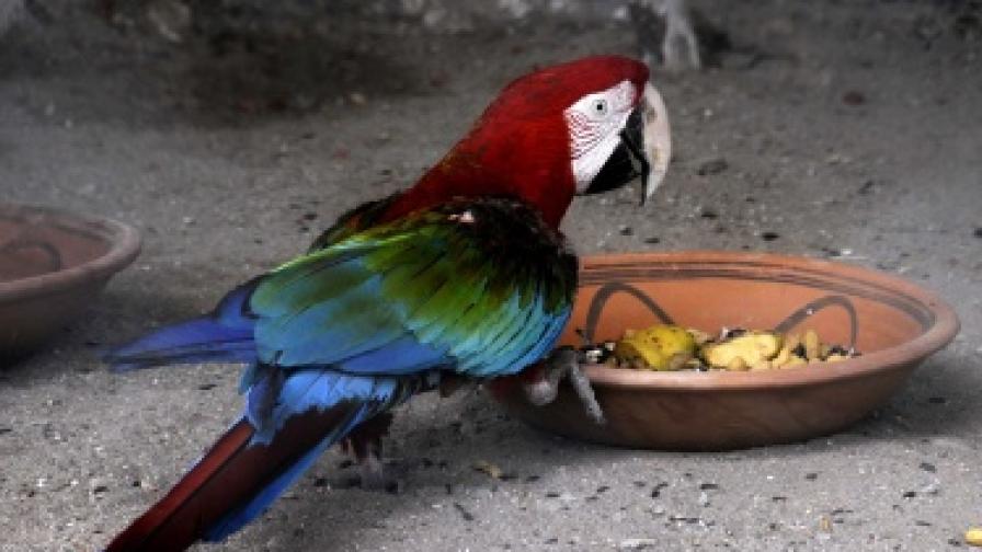 6 месеца затвор за убийство на папагал