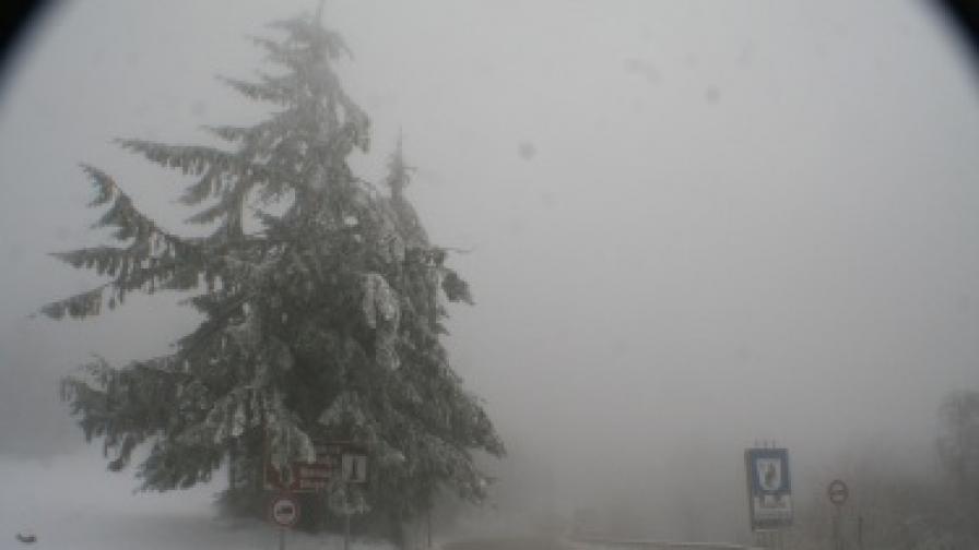 30 аварирали автомобила в Силистренско